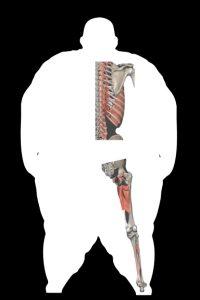 Body Type Four of The Four Body Types