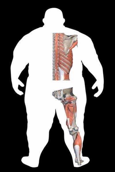 Body Type Three of The Four Body Types