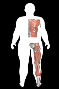 Body Type Two of The Four Body Types