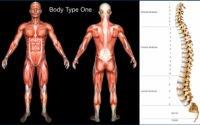 Standard Science/Scientific Human Body Anatomy Book Body Type One (BT1) Diagram/Image