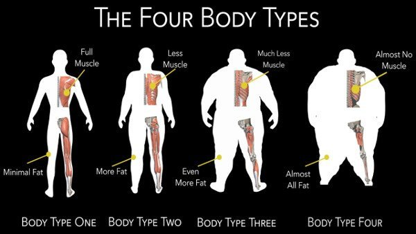 Vertebrae, Posture, Muscle Mass - Obesity - The Four Body Types