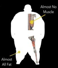 Fellow One Research - Gnosis Gnostic Research Participant - The Four Body Types Free Body Type Shape Quiz Calculator