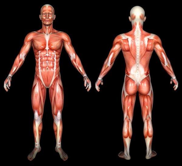 Body Type One (BT1) - Free Body Type Shape Quiz Calculator