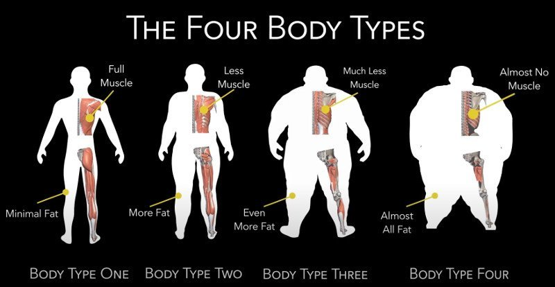 Fellow One Research Participant - The Four Body Types Identifier